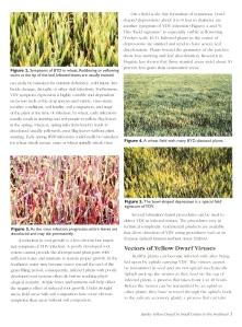 BYD (Barley Yellow Dwarf, LSU)