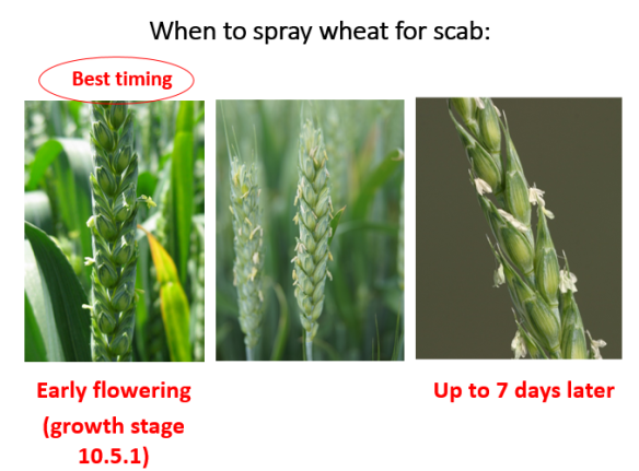 FHB When to spray